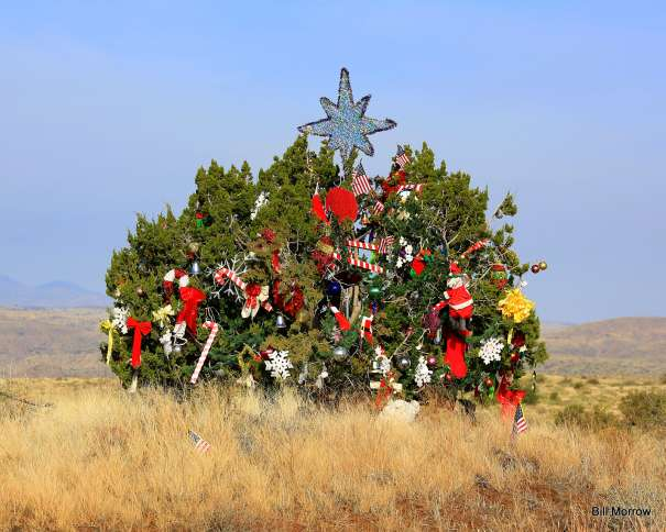 Guideposts: This festive juniper growing on the median of Interstate 17 in Arizona, near the Sunset Point rest area an hour north of Phoenix, has intrigued drivers for nearly three decades.