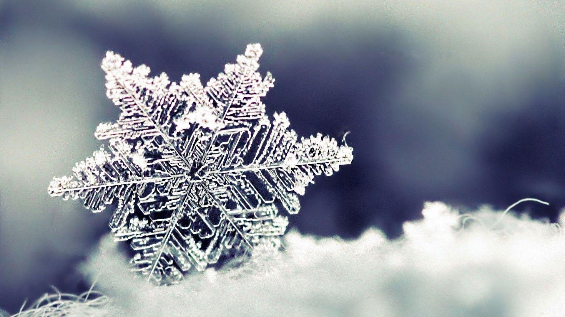 Image result for real snowflake background